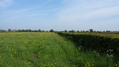Long Forest - Commonwood, Holt - Year 2 Hedge Survey - 18-5-18 (23) (Keep Wales Tidy) Tags: end year 1 site assessment iselecting hedgerows for 2