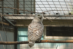 *** (i13rbk) Tags: fareast zoo khabarovsk zoogarden animals spring amur park forest shore owl