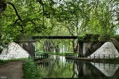 Au bord du canal (olivier.debot) Tags: canal dole jura france eau water pont platane reflet nikond7100