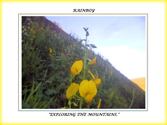 Ahh the mountains ... (Guilherme Alex) Tags: flowers mountains wild exploring nature natural world countryside minasgerais mylife yellow surprises green landscape flower little morning sun macro high grass digitalcamera picture frame farfromthecity walking jungle forest samsung art beautiful wonderful nice shot