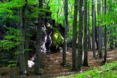 Bäume, Stein und Licht (Maik Kregel) Tags: maikkregel mountain elbsandstein dresden a6000 sony berge fels