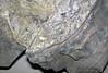 Flint breccia-floored cavity in pinstriple flint (Vanport Flint, Middle Pennsylvanian; Nethers Flint Quarries, Flint Ridge, Ohio, USA) 2 (James St. John) Tags: flint breccia vanport allegheny group pennsylvanian nethers quarry quarries ridge muskingum county ohio quartz pinstripe