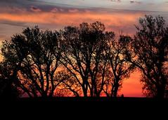 2018 - Disaster Relief - Vici, Oklahoma Wildfires (zendt66) Tags: zendt66 zendt nikon d7200 sbc sbdr bgco southern baptist disaster relief wildfire fire vici christian volunteer remediation ash out