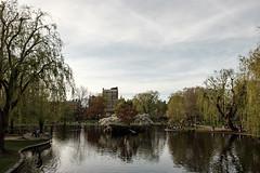 20180505 Boston Public Garden pond 2 (chromewaves) Tags: fujifilm xt20 xf 1855mm f284 r lm ois boston massachusetts public garden