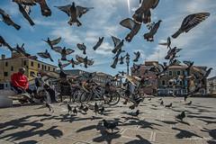 Italien - Chioggia - Tauben (2) (Pana53) Tags: photographedbypana53 pana53 italien italia chioggia platz tauben fütterung flug flugstudien gefieder häuser mittelmeer bauten wasser himmel wolken auffliegen schatten lichtschatten transparenz nikon nikond810 reisefotografie