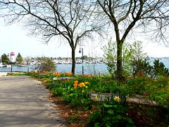 """""""Life is a gift.  Don't waste a single second on doing something that doesn't make you happy."""" (Trinimusic2008 -blessings) Tags: trinimusic2008 judymeikle nature neighbourhood yesterday lakeshore may 2018 spring walkwithquincy toronto to ontario canada sonydschx80 mimicowaterfrontpark promenade rock gazebo water lake lakeontario sailboats marina"""