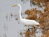 05-17-18-0018228 (Lake Worth) Tags: animal animals bird birds birdwatcher everglades southflorida feathers florida nature outdoor outdoors waterbirds wetlands wildlife wings
