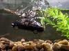 VW Passat (AlanOrganLRPS) Tags: vw passat car auto immersion sinking submerged splash bubbles volkswagen