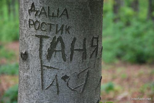 Ботанічний сад імені Гришка Буковий гай InterNetri  Ukraine 098