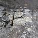 Sandstone (Middle Pennsylvanian; Frazeysburg Pit, Muskingum County, Ohio, USA) 13