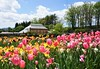 Gardens at Biltmore (ironicdream) Tags: biltmore spring northcarolina usa asheville sony a6000 tulip colorful