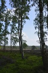 zilvensche heide_D719645 (Vogelmelk) Tags: gelderslandschap gelderland nederland nature natuur bos veluwe loenermark