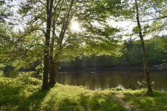 By the river (Sam T (samm4mrox)) Tags: lisbonmaine newengland nikond3400 papermillnaturetrail trees spring