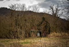 Overgrown (RansomedNBlood) Tags: nikond5100 hansford wv westvirginia abandoned