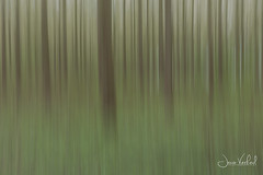 Forest (Jaco Verheul) Tags: tree trees wood woodland jaco verheul nikon d7100 movement landscape dynamicgreen lines stripes blur