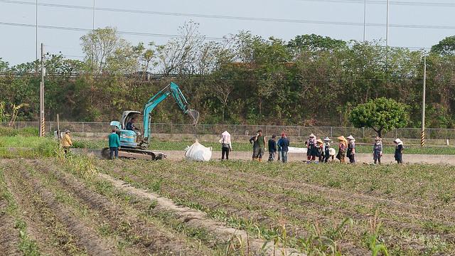 原來地瓜是這樣採收,還有人專門撿剩下的蕃薯(11)