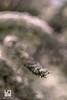SPORGENZA (Lace1952) Tags: primavera fiori natura controlucesfocato fuorifuoco bokeh effetto bolle