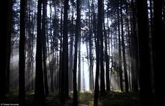 Lasy Nakło-Chechło - 2014 (Tomek Szczyrba) Tags: las forest światło light magic scenery krajobraz polska morning poranek przyroda nature poland landscape