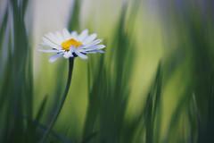 welcome to the jungle (christian mu) Tags: flowers bokeh nature germany muenster münster botanicalgarden botanischergarten schlossgarten christianmu macro 9028g 9028 90mm sony sonya7riii sonya7rm3 spring