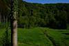 Greenier (John fae Fife) Tags: fujifilmx mersch xe3 luxembourg trees landscape fields