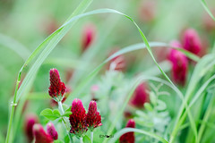 Pink (em-si) Tags: wernberg austria österreich kärnten carinthia nikond800 samyang13520 green grün bokeh natur nature