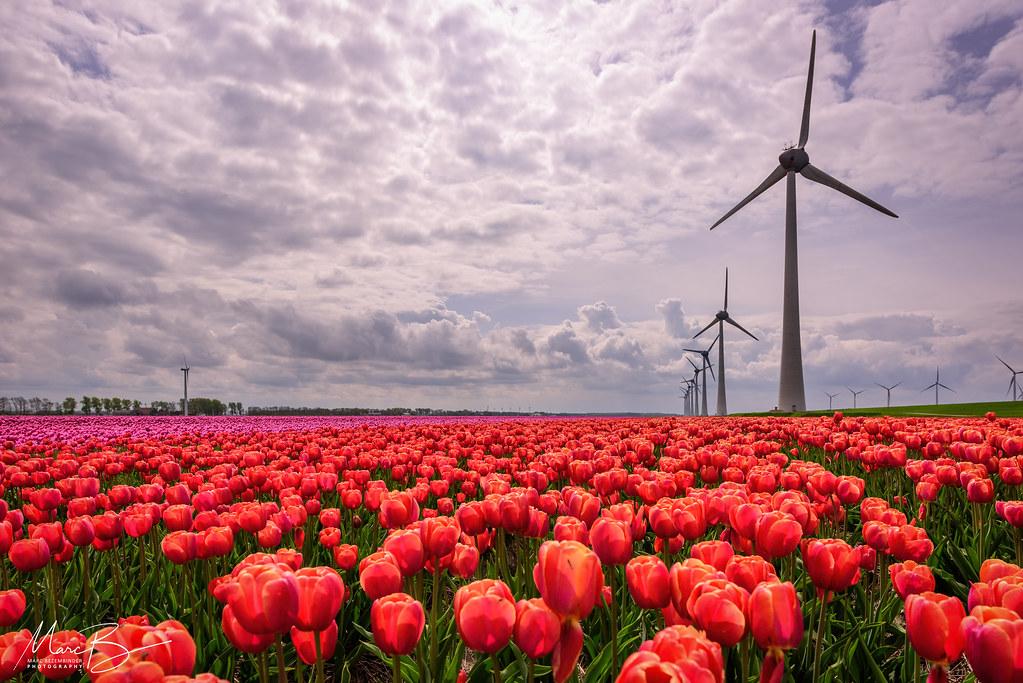 Afbeeldingsresultaat voor tulpenroute zeewolde windmolen