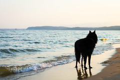 Silhouette (Karolina Demczuk) Tags: dog silhouette beach water sky sunset black belgian shepherd groenendael pet animal domesticated spring nature outdoors light