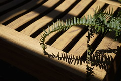 Fern Composition (hanley.will) Tags: fern plant houseplant keys bench sarahpdukegardens sarahdukegardens dukegardens diagonal line shadow dukeuniversity duke