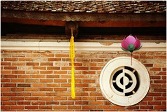 Loto ... sen ... 蓮花 (Augusta Onida) Tags: loto fiore flower leicam vietnam asia duonglam tempio temple muro wall oriente