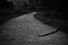 Dusk (Catch the dream) Tags: snake road encounter knoxville tn dusk