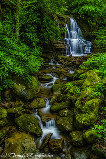 Spring Green Waterfall and Rhododendron