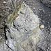 Sandstone (Middle Pennsylvanian; Frazeysburg Pit, Muskingum County, Ohio, USA) 6