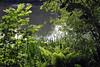 Rheydt-Stadtwaldweiher im Frühling (borntobewild1946) Tags: mönchengladbachrheydt rheydtstadtwald rheydtstadtwaldweiher weiher pond 21052018 frühlingshaft springlike frühling spring springtime farn seeufer