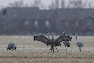 Neighbourhood birding
