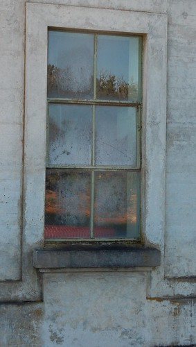 Reflections in Window