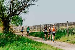 trail_delle_rocche_roero_2018_0395 (Ecomuseo delle Rocche del Roero) Tags: aprile ecomuseodellerocche edizione montà rocche trail uisp trailrunning roero