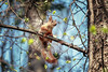 Lost in thought (Unicorn.mod) Tags: 2018 colors nature squirrel tree outdoor canoneos6d canon70300f456isusm canon