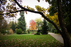 Who cares about spring (Ladistorta) Tags: autumn autunno green trees grass leaves park alberi verde foglie parco prato dream sogno orton