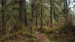 'Urban' Jungle Walk (Katy on the Tundra) Tags: pacifictemperaterainforest rainforest juneau mendenhallriver