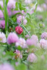 solitaire (Patatitphoto) Tags: lauragais flore