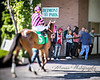 Have Another leaving the paddock (EASY GOER) Tags: horse racing equines thoroughbreds lensbaby edge80 belmont park equine thoroughbred
