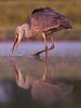Grey heron (Kristóf Diós) Tags: grey heron ardea cinerea szürke gém nature bird wildlife photo birdphotography photography mirror water sunrise dawn lights természet természetfotó hungary