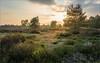 Heidelandschaft (tzim76) Tags: landschaft landscape sunset sonnenuntergang heide bäume licht ruhe himmel wolken