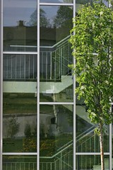 stairwell (EllaH52) Tags: stairwell stairs staircase tree rowan reflections spring