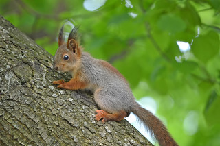 Squirrel's baby