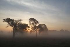 Good morning (polletjes) Tags: morning light boom bomen tree trees zonsopkomst sunrise mist fog zon sun landschap landscape sky clouds leersumse veld field nederland netherlands