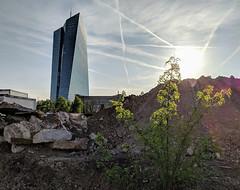 Frankfurt European Central Bank (Aviller71) Tags: frankfurt germany deutschland frankfurtammain architecture architektur europeancentralbank ecb ezb