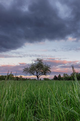 Right in the middle (MC-80) Tags: tree lonely sunset
