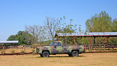 Camouflage Truck, Kirby Family Farm, Tillerson, Florida (gg1electrice60) Tags: kirbyfamilyfarm amusements amusementpark amusementsfordisadvantagedchildren amusementsforcriticallyillchildren comfortforcriticallyillchildren openingin2019 19650ne30thstreet 19650northeast30thst 1965030thstreet 19650nethirtiethst florida fl levycounty unitedstates usa us america specialevents trainrides grass trees camouflagetruck pickuptruck truck pickup kiddierides grownuprides churchbuses camouflage rails track shelter canopy woodenfence fence olivegreen williston rustycrusty rustyandcrusty rust commercialutilitycargovehicle cucv military usmilitarylightutilityvehicle