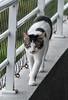 Olhar felino (felipe sahd) Tags: cats gatos felinos city cidade fortaleza ceará brasil nordeste